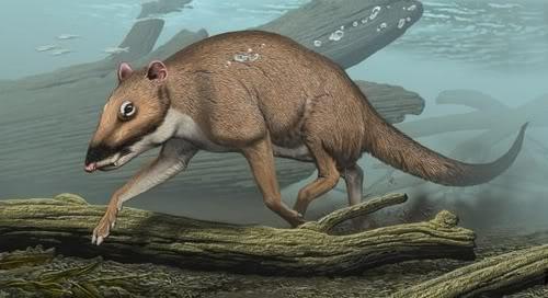 evolucion de las nutrias